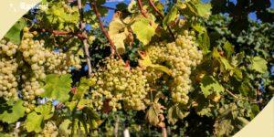 terre del vino veneto